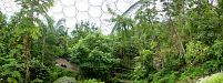 Eden Project - Tropical Area - Composition - Eden Project