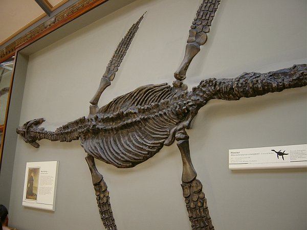 Photo - Natural History Museum - Pliosaur