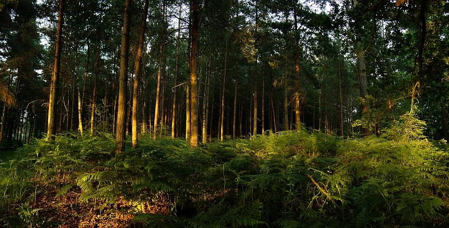Photo - Worthlodge forest - West Sussex