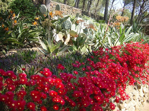Photo - Cap Roig Botanic Garden