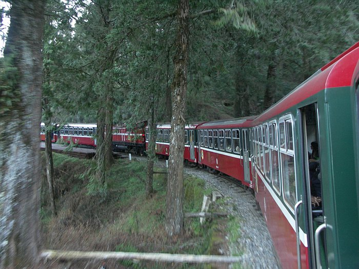 Photo - The train in Alishan Forest