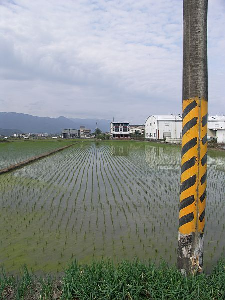 Photo - Rice field and electric post